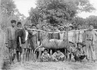 Harimau diburu di Malingping Lebak Tahun 1941